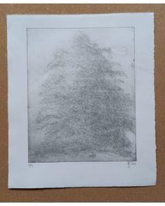 Baum im Nebel 1/4