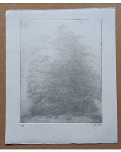 Baum im Nebel 2/4